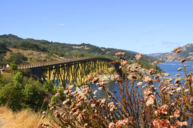 bridge over water with flowers in foreground