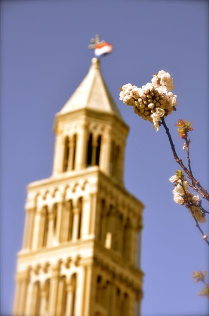 Tower of Split Croatia's St. Duje Cathedral, with pink spring blossoms