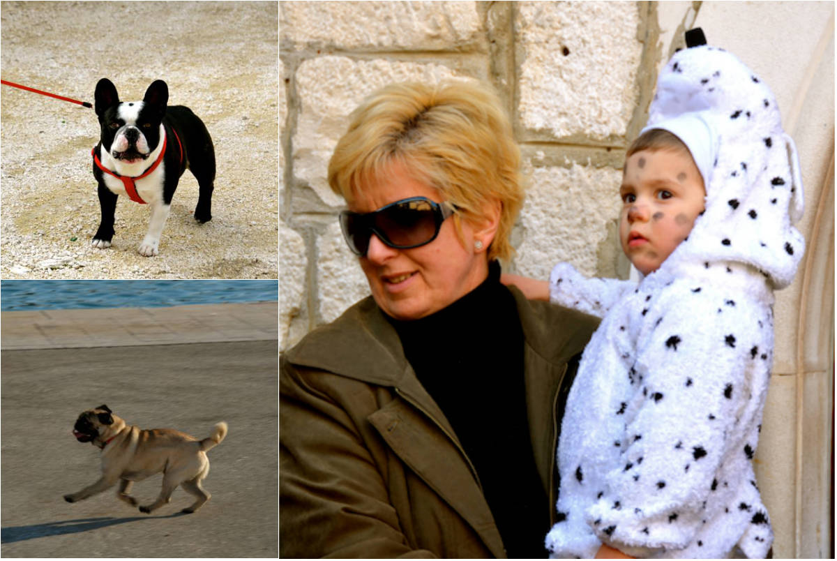 New friends in Trogir: Ummy the French Bulldog, Jacques the Pug and our first Dalmatian spotting, at a Carnival parade. The Dalmatian breed is said to originate in this region of Croatia.