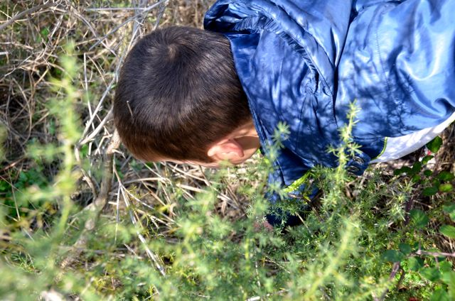 foraging for wild asparagus in croati