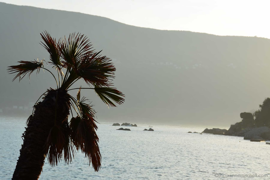 A palm tree frames a Herceg Novi sea-view.