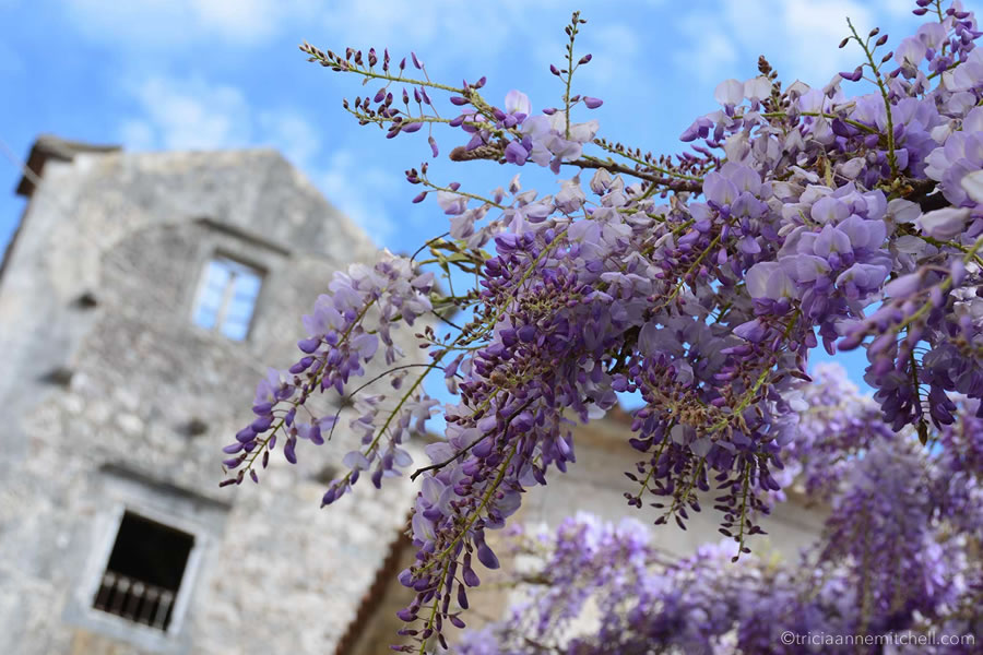 A branch of purple wisteria flowers, in front of a roofless stone home in Perast, Montenegro.