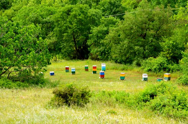 bee huts in Greek countryside