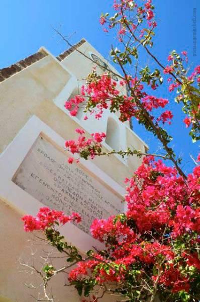 Pink-flowers-in-Santorini