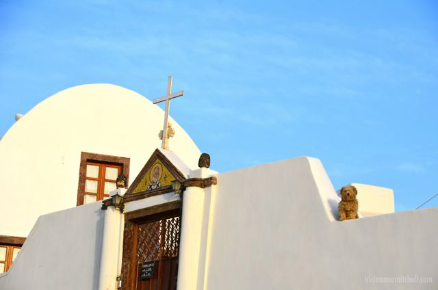 Santorini-dog-sunbathing-on-church-2