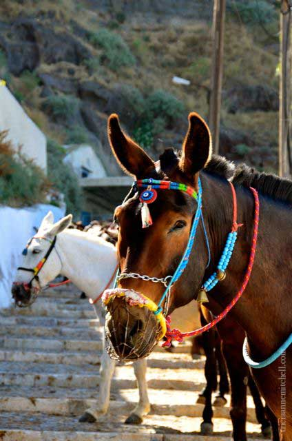 Santorini-donkey-on-Fira-steps-greece