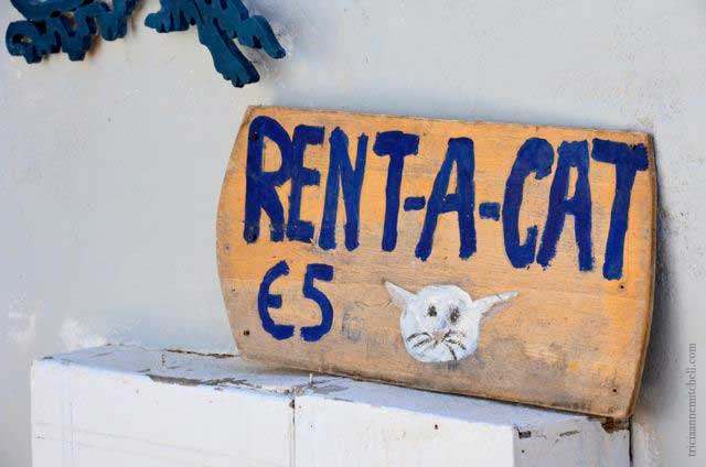 Santorini-sign-cat