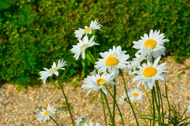 Claude Monet Garden Visit Giverny05