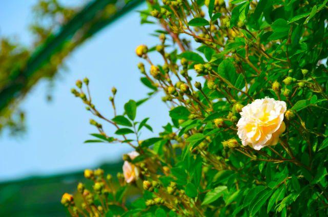 Claude Monet Garden Visit Giverny11