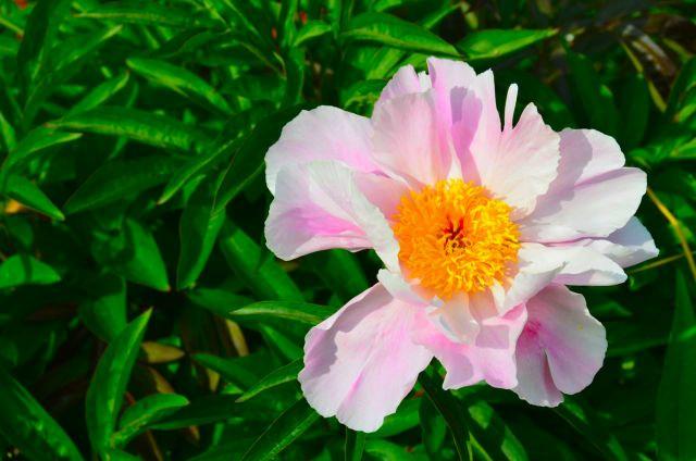 Claude Monet Garden Visit Giverny13