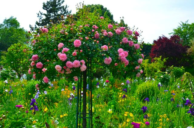 Claude Monet Garden Visit Giverny19