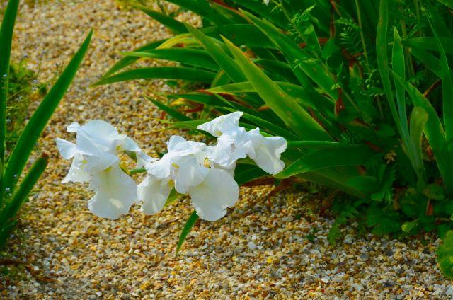 Claude Monet Garden Visit Giverny28