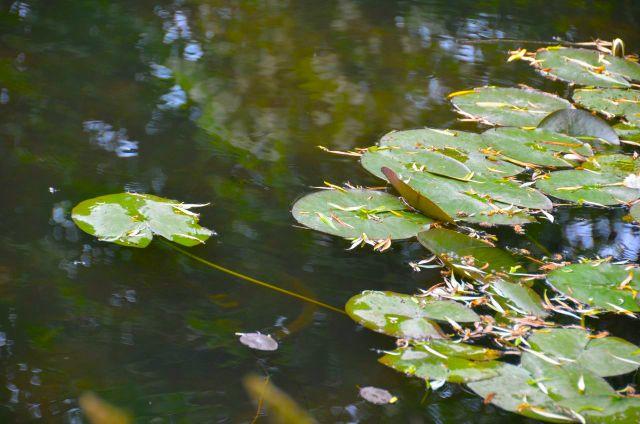 Claude Monet Garden Visit Giverny37