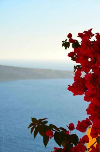 Oia-flowers-Santorini