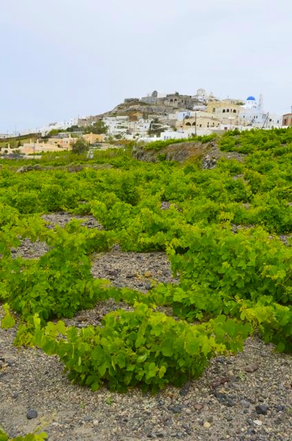 Santorini wine tasting Greek wine24