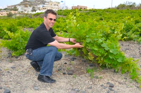 santorini-wine-tasting-greek-wine28