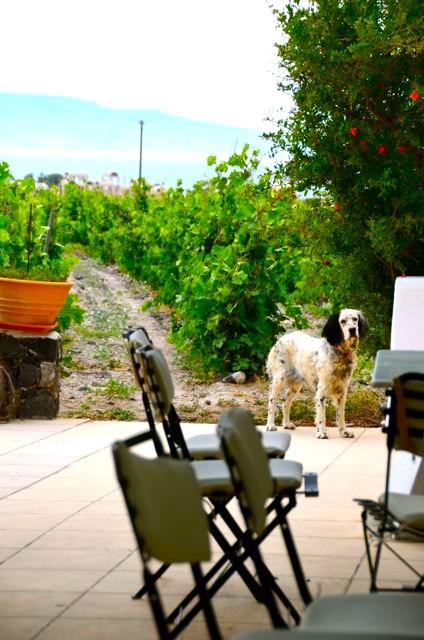 Santorini wine tasting Greek wine68