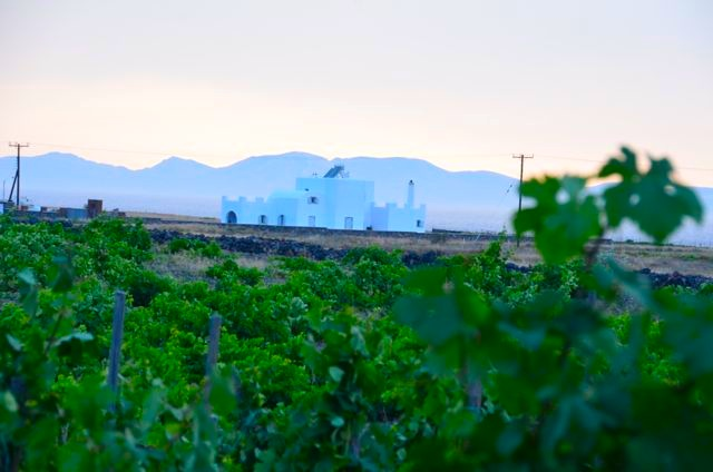 Santorini wine tasting Greek wine75