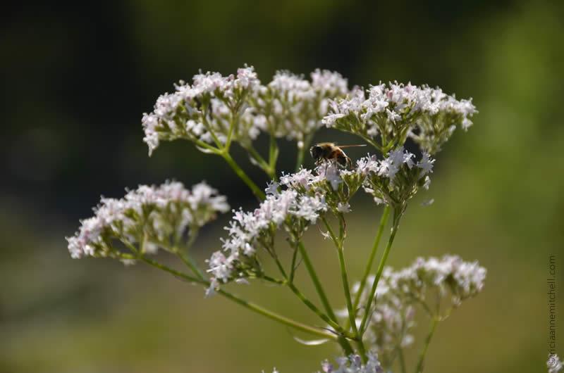 Alpine flowers in Germany