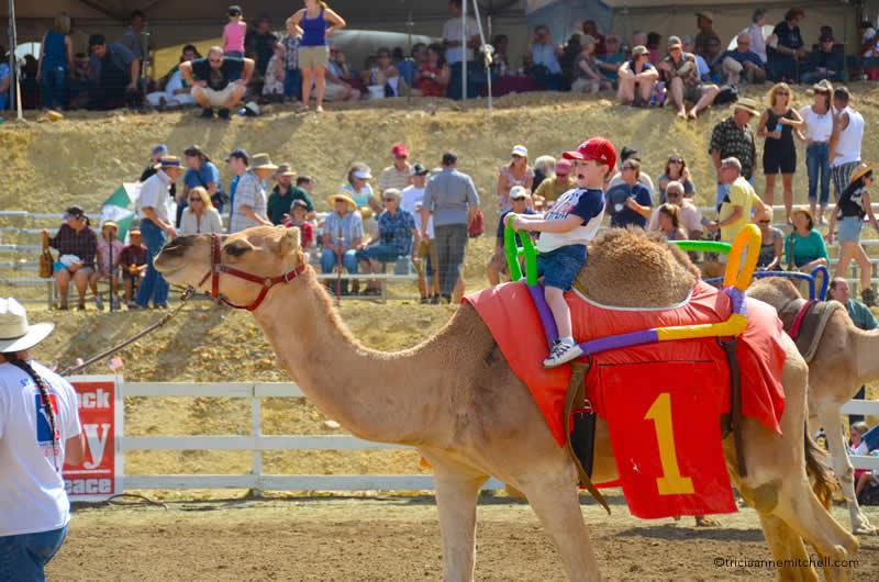 Boy riding virginia city camel