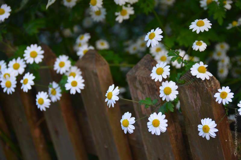 Flowers in Bavaria 2