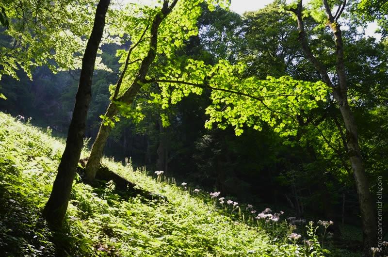 Hiking Oberammergau 4