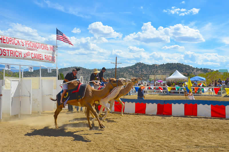 Virginia City Camel Races