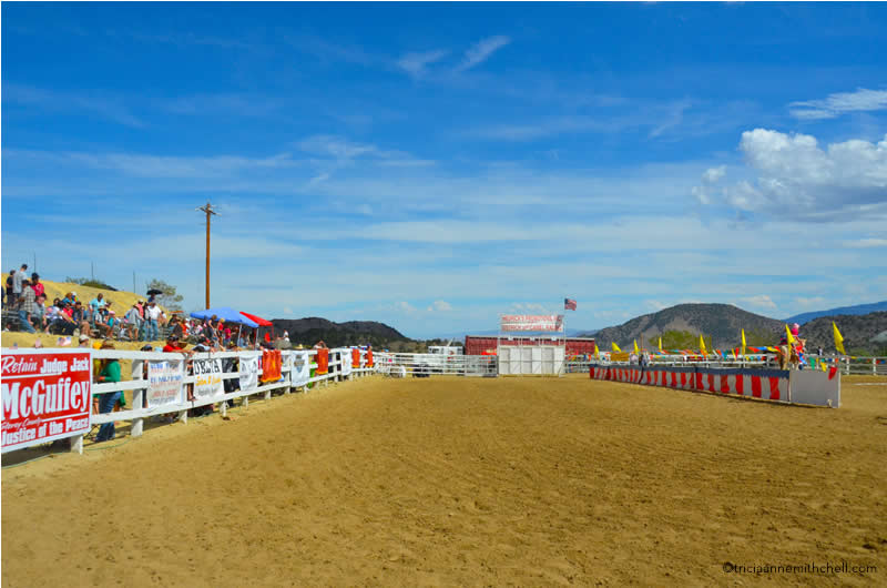 Virginia City Camel Races2