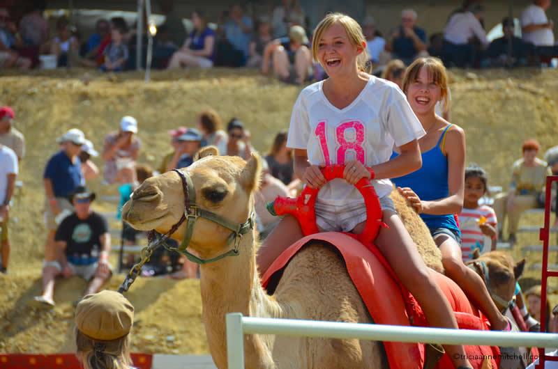 Virginia City Camel Races3
