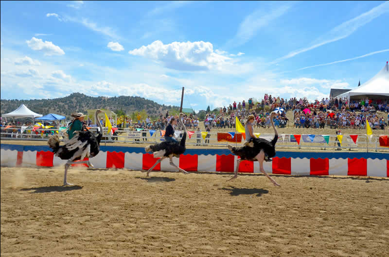 Virginia City Ostrich Races