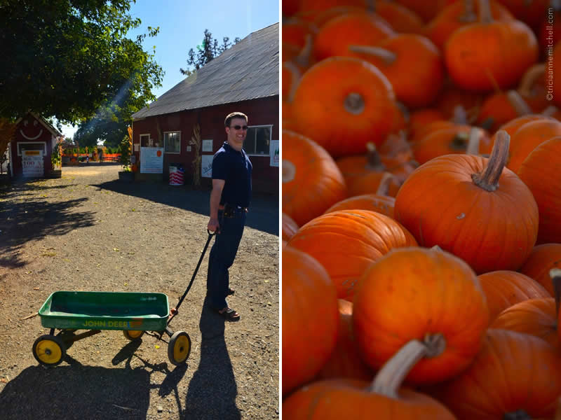 Halloween Pumpkin Farm California 2