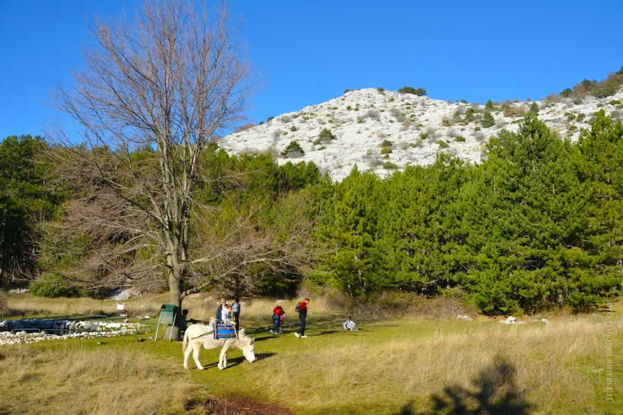 Hiking Mosor Donkey Grazing Croatia