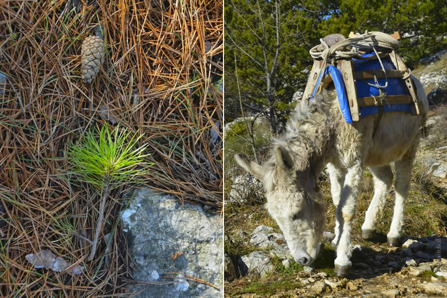 Hiking Mosor Donkey in Split Croatia