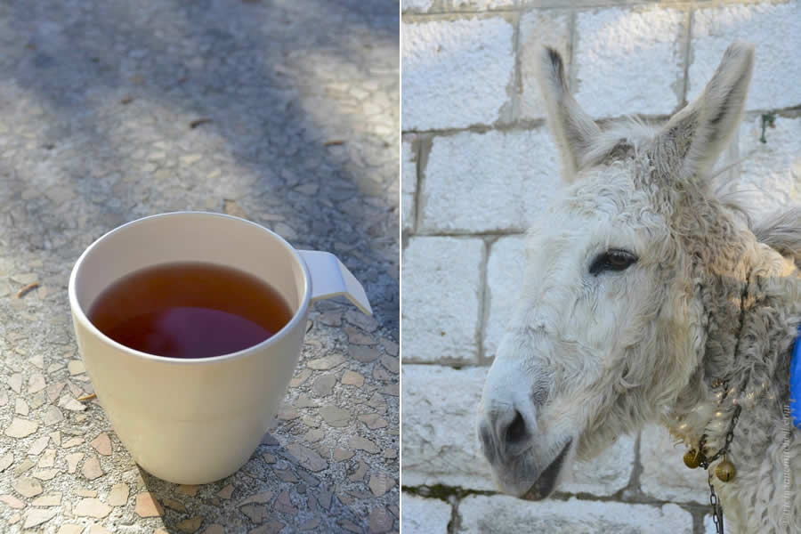 Hiking Mosor Mountain Split Croatia mountain tea and donkey