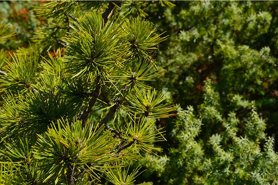 Mosor Flora Hike Split Croatia