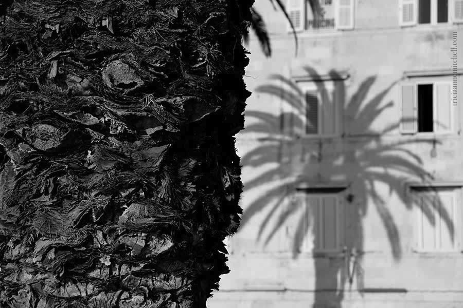 palm-tree-split-riva