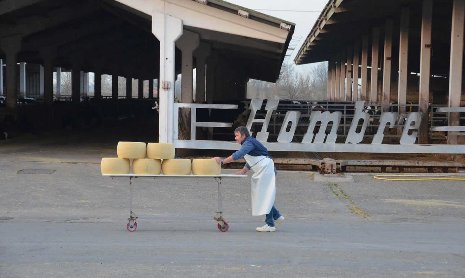 A man pushes 6 wheels of Parmigiano Reggiano cheese at the Hombre Farm near Modena, Italy.