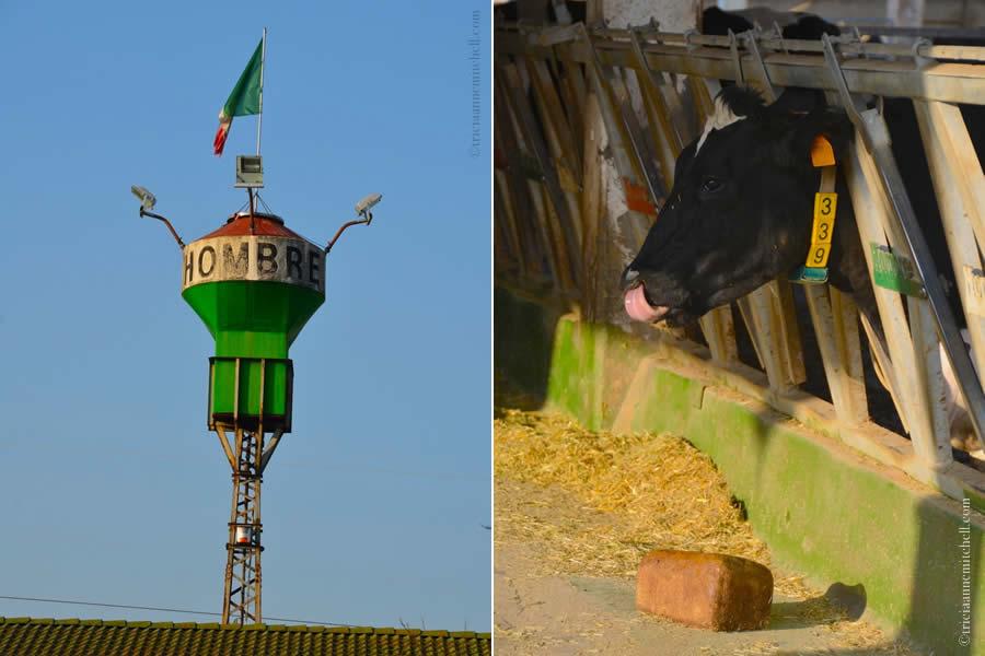 Hombre Parmigiano Reggiano Cheese Cow Modena Italy