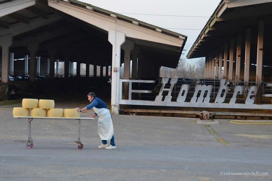 Hombre Parmigiano Reggiano Cheese Production