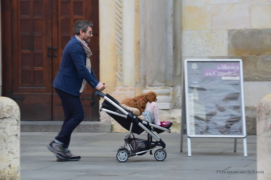 Modena Cathedral Dog Stroller Italy