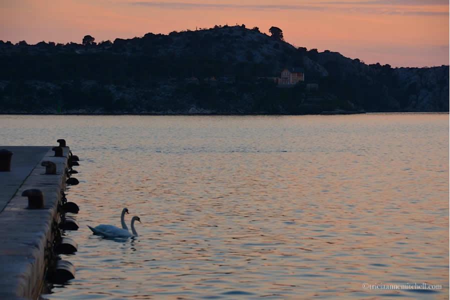 Sibenik Swans Sunset