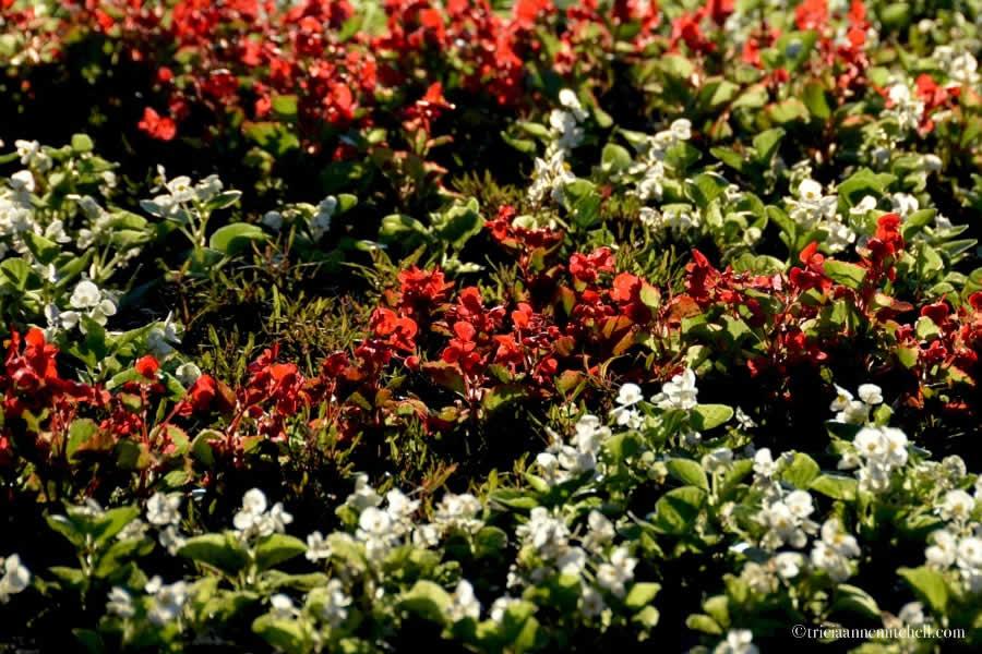 Lake Palic Serbia flowers