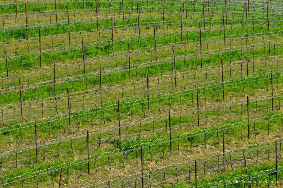 Massimago vineyards near Verona Italy