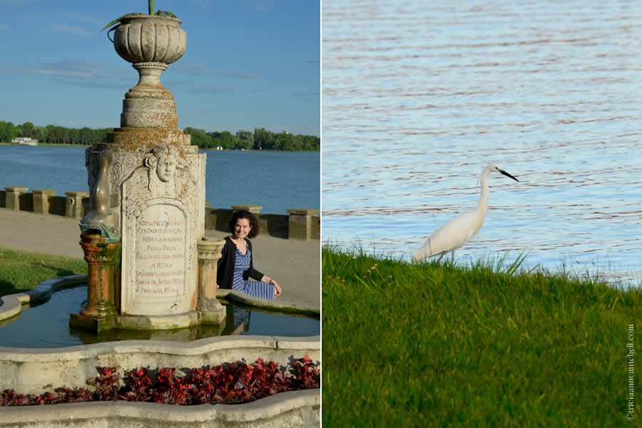 Palic Lake fountain and bird