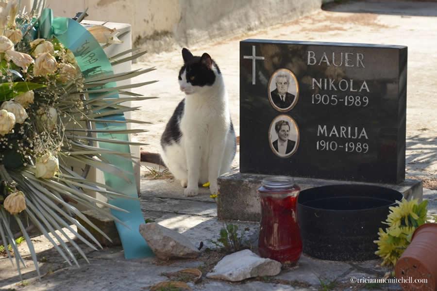 Sibenik Croatia Cemetery headstone 2