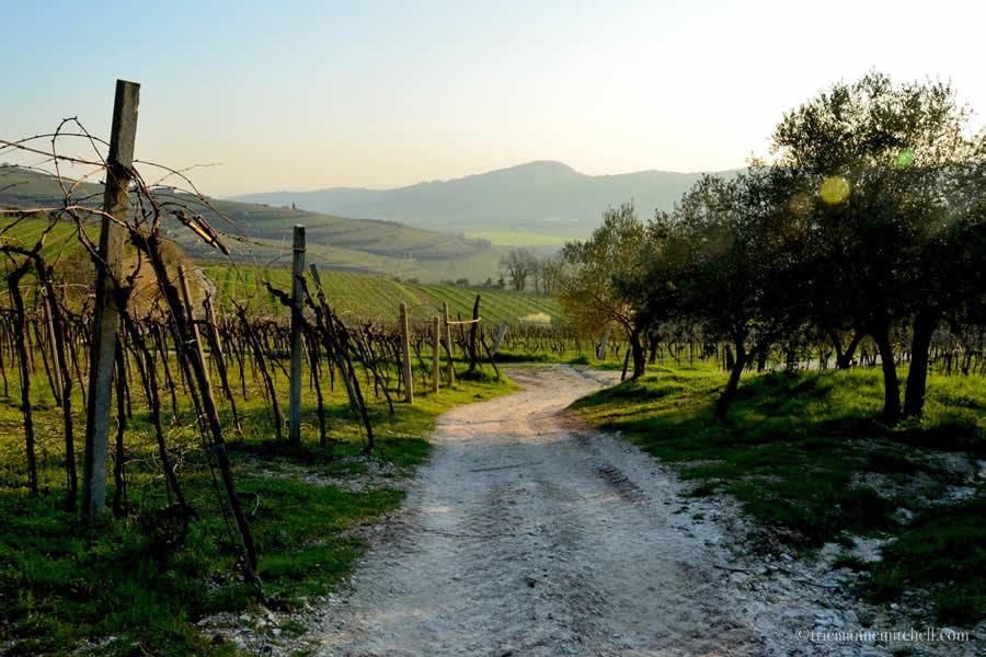 Valpolicella Vineyards Verona Italy Massimago