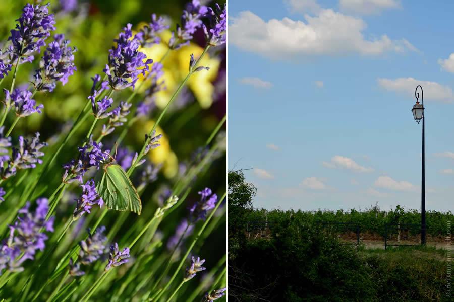 Bordeaux Lavender Lamp-post