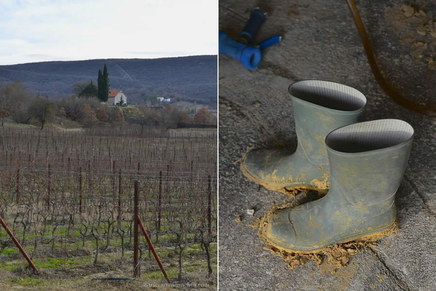 Krolo Winery Vineyard and Boots