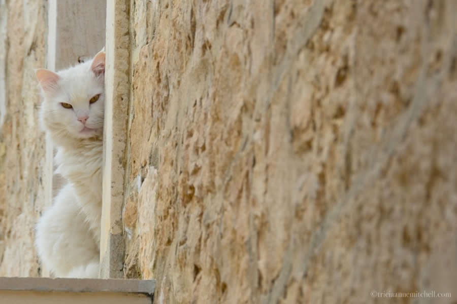 Cat Hvar Town Croatia