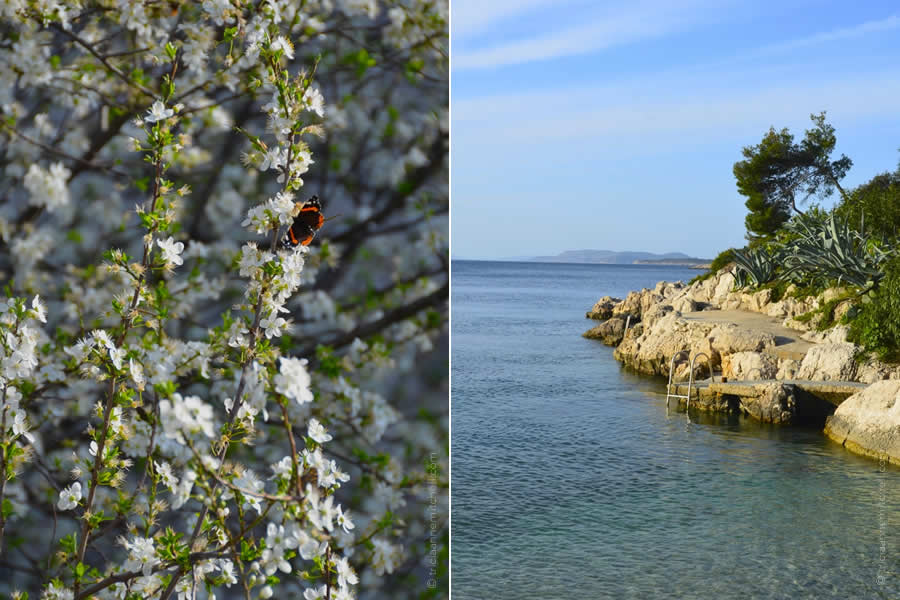 Croatian Coast spring flowers and Adriatic Sea